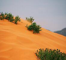 Pink Coral Sands State Park Utah by goldnzrule