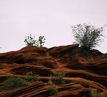 Route 14 Utah Layers by goldnzrule