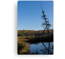 Of Tree Bones and Swamps -  Canvas Print
