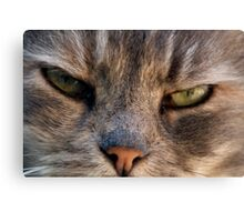 Caught Unawares Canvas Print
