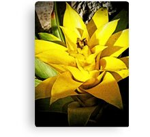 Bromeliad Yellow Canvas Print