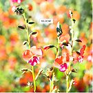 Heart leaf Flame Pea - Australian native wildflower photo print decor by Kell Rowe