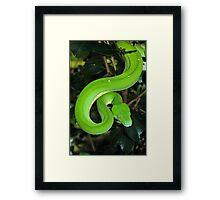 Green Python Framed Print