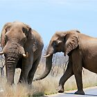 CONFRONTATIONS -  THE AFRICAN ELEPHANT – Loxodonta Africana by Magaret Meintjes