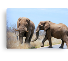 CONFRONTATIONS -  THE AFRICAN ELEPHANT – Loxodonta Africana Canvas Print