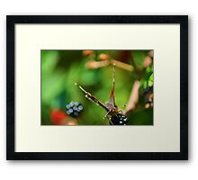 Butterfly in the Hedgerow Framed Print