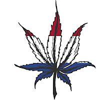 Cannabis (marijuana) leaf ,hand drawn Photographic Print