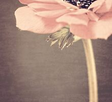 Vintage Anemone by Caitlyn Grasso