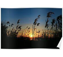Sunset 6 Poster