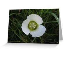 Sego Lily #1 Greeting Card