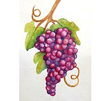 TUSCAN GRAPES Photographic Print