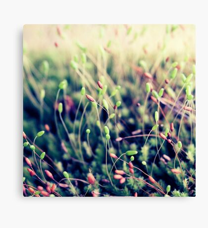 The Little Things Canvas Print