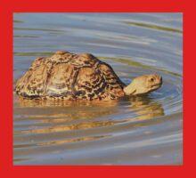 Tortoise Summer Swim - Natural Fun One Piece - Short Sleeve