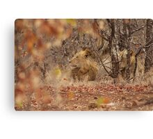 Lions in the Kruger National Park 2 of 2 Canvas Print