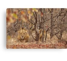 Lions in the Kruger National Park 1 of 2 Canvas Print