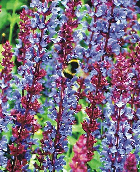 Busy Bee by himmstudios