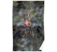 Yellow Web with Spider Poster
