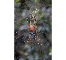 Yellow Web with Spider Photographic Print