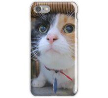 Calico Cat for Adoption iPhone Case/Skin