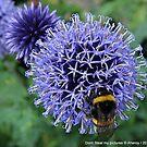 Bee by Aheroy