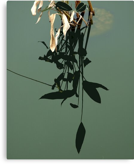 Reflections of Leaves by Barry Doherty