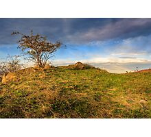 autumn wild rose and stone on a yellowed hill Photographic Print