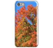 Autumn Maple Tree  iPhone Case/Skin