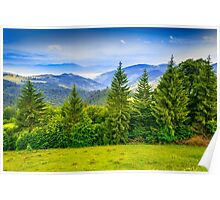 row of trees in mountains Poster