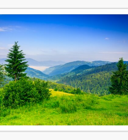 two green pine tree on meadow in the mountains early morning Sticker