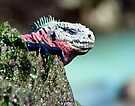 Marine Iguana on Espinola Island by Yukondick
