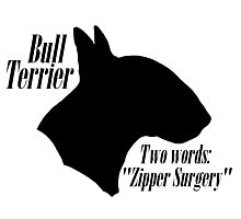 Bull Terrier- warning Photographic Print