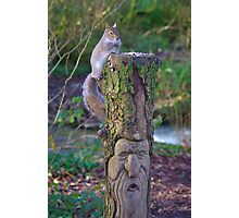 Squirrel on a carved tree stump  Photographic Print