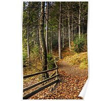 forest walks in autumn Poster
