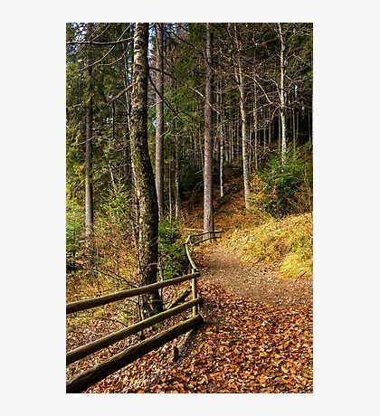 forest walks in autumn Photographic Print