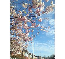 Cherry blossoms and blue skies Photographic Print