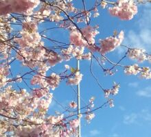 Cherry blossoms and blue skies Sticker