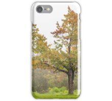 lonely oak in fog iPhone Case/Skin