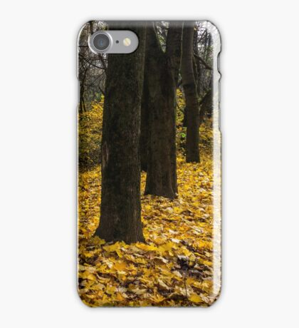 autumn forest in foliage iPhone Case/Skin