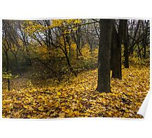 autumn forest in foliage Poster