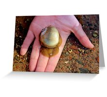 The Northern Moon Snail Greeting Card