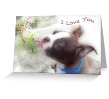I Love You ~ Boston Terrier Greeting Card Greeting Card