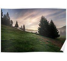 fir trees on  hillside meadow in fog before sunrise Poster