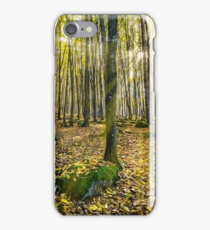 foggy autumn forest in sun rays iPhone Case/Skin
