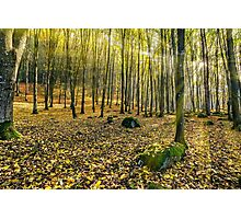 foggy autumn forest in sun rays Photographic Print