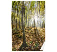 trees in foggy autumn forest Poster
