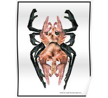 Hands on spider by Darryl kravitz Poster