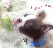 I Miss You ~ Boston Terrier Greeting Card by Susan Werby
