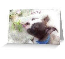 Sorry ~ Boston Terrier Greeting Card Greeting Card