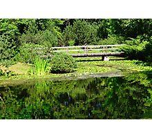 Japanese Garden in Summer Photographic Print