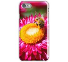 Helichrysum bracteatum with a busy bee iPhone Case/Skin